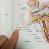 過屈曲症候群⁉ 橈骨神経の広背筋腱での絞扼神経障害~三頭筋のマヒの治療から~
