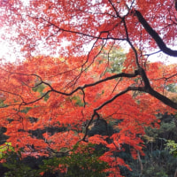 紅葉が綺麗~~~~~~~!\(*^▽^▽*)/