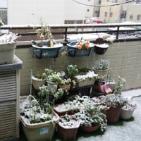 11月の雪。