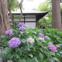 ぶらり散策~新緑と花の真如堂~