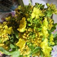 菜の花※カフェ