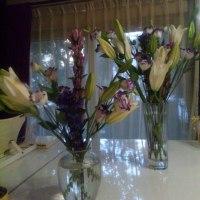 シャンソン歌手リリ・レイLILI LEY  稽古場の 気の流れ 花達の浄化作用