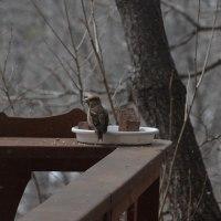 名前を知らないお客さん、午後の森ウッドデッキでひと休み。
