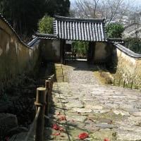 早春の白毫寺 ~椿と萩の花の寺
