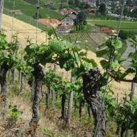 ドイツを代表する花崗岩のワイン