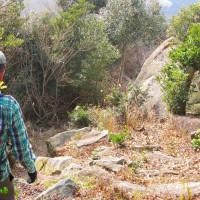 11 夫婦岩山(240m:山口県周南市)登山(続き)  下山へと