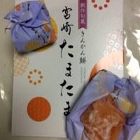 きんかん餅  宮崎  たまたま