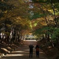第124回古都旅歩き 隋心院、醍醐寺