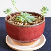 辰砂の植木鉢