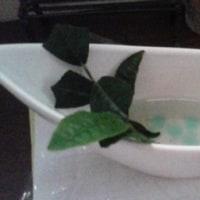お茶の木の挿し木
