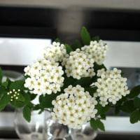 数日に一度入れ替えている花々とウインドーディスプレー
