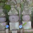城願寺土肥氏墓―歴史雑感〔33〕―
