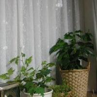 我が家の花達8月P2