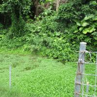 沖縄の風景 垣花樋川