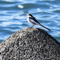 伊勢湾側の鳥達