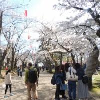 千秋公園!