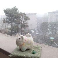 こまま 雪の世界へ。