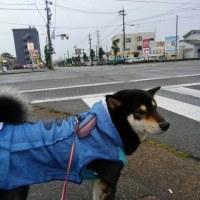 久し振りの雨降り