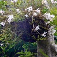 高知の八幡宮と庭の花