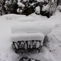 雪国ing⑥