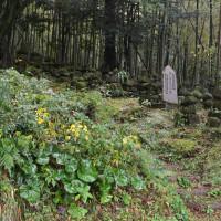 冠岳神社周辺の紅葉が見頃です 2016/11/27 (鹿児島)
