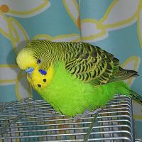 ダイエット組の放鳥