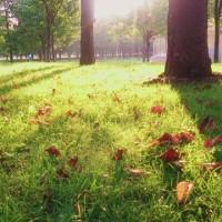 秋の気配  『早朝の公園』を歩いた。2016.9.21