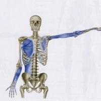 身体は一つのユニットだという実感~後面深層のアウターユニットとディープフロントアームラインのリンク~