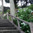 真野寺花便り(6月28日)