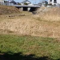 大川のヤギ達。春近し・・・?。返礼品競争岐路に。