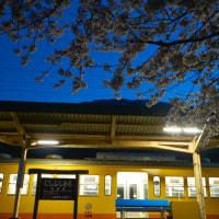 西藤原駅の桜