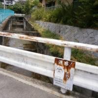 河陽2号橋(川をたどれば湯谷川編)