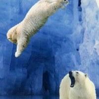 🐹「あーーーーっ ここ水深10センチだベアーーっ!!」🐹