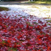 紅葉と残雪