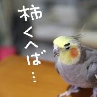 柿の日(10月26日)