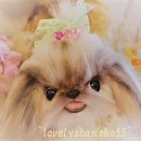 シーズーのココちゃんとトイプードルのテディちゃん…(^。^)y-.。o○キャワ!!