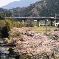 4月16日 桜とドクターイエロー