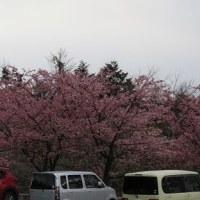 桜散歩 その3 ( お土産みっつ・・・ )