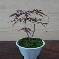 鉢植え 1