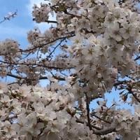 月組『宝塚をどり』 3/29 3時