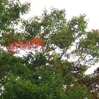 紅葉がはじまってますよ♪