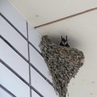 カラアゲランチ さん羽