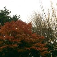 秋の總持寺