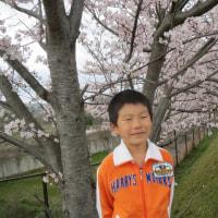 桜はまさ咲いています