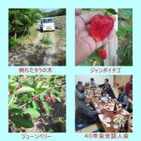 ジャンボイチゴ