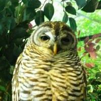 倉敷『フクロウの森』沢山観て来ました!