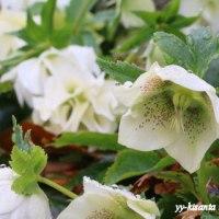 春を迎えに昭和記念公園へ(2)