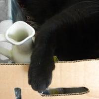 猫の大掃除