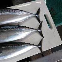 9月、鮎丸釣り&釣り魚バーベキュー