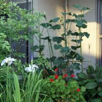 我が家の庭